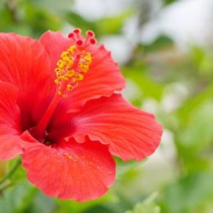 パームヴィラ石垣島の貸切別荘
